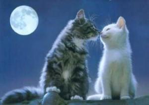 gatti-innamorati
