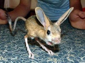 In Australia gli animali 'brutti' sono sottoposti a minor attenzione scientifica