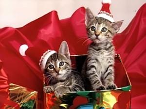 buon natale a tutti !!!!!